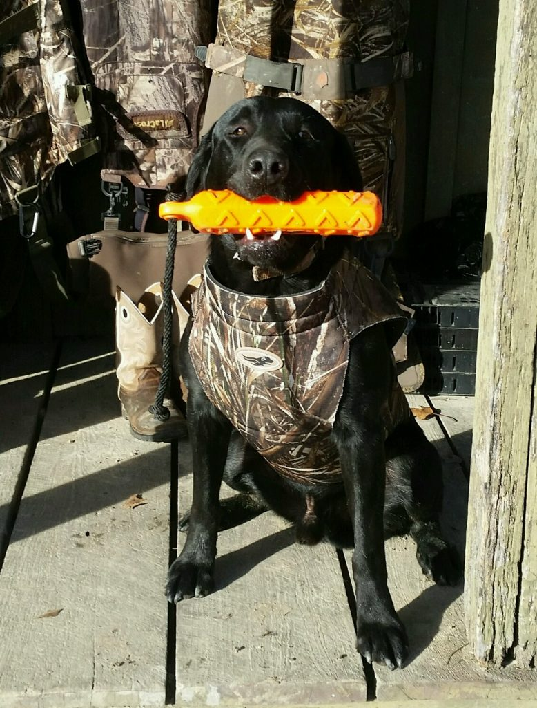 Rock Springs Labs - Lab Puppies for Sale in Alabama