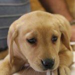 Puppies Blountsville AL